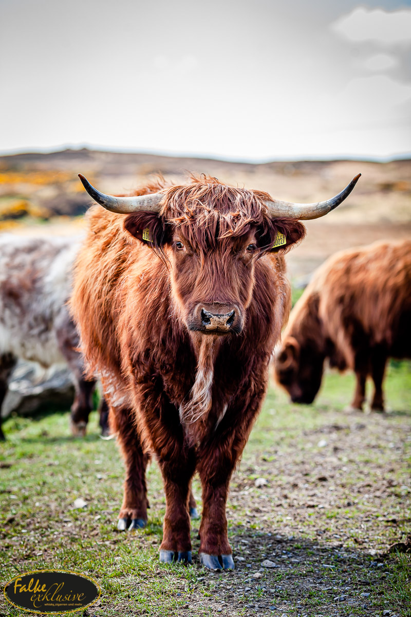 Schottland_Tour_2019_klein-39